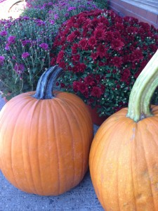 pumpkins mums outside coop