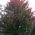 Fulton County Foliage Report: Week of October 7-13