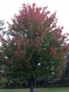 FMCC trees 3