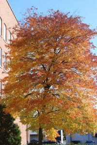 Leader Herald Tree