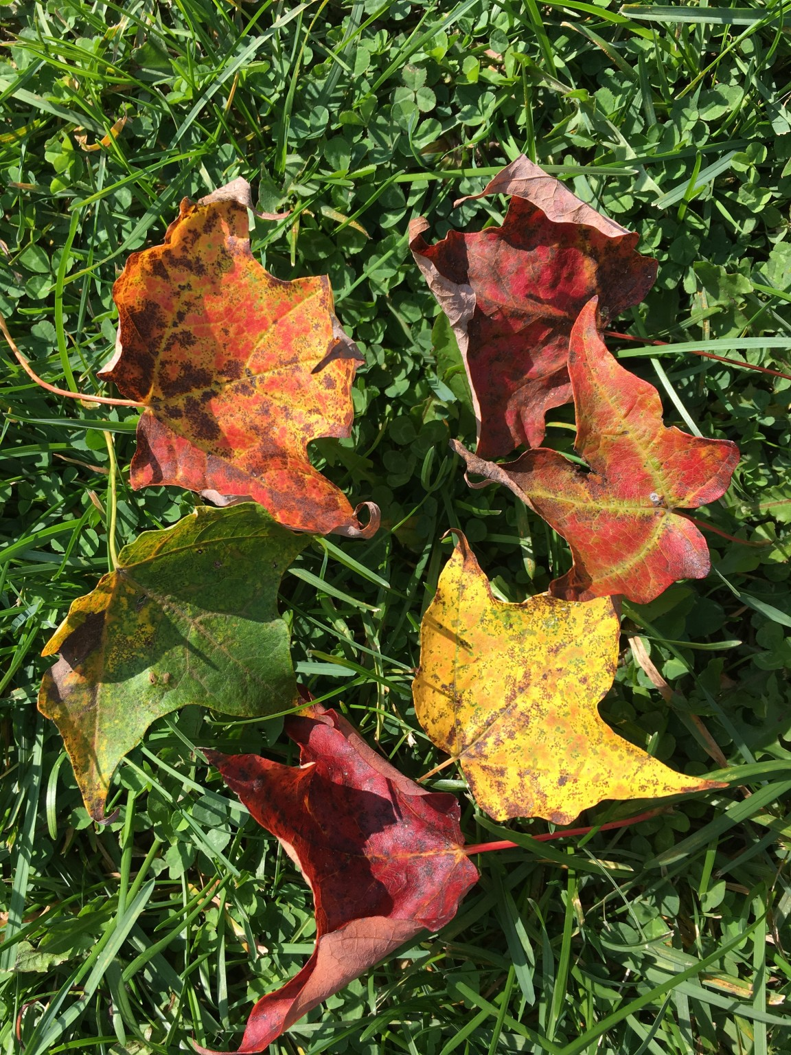 Fall Foliage Report: September 12-18 - Things to do in Fulton County NY