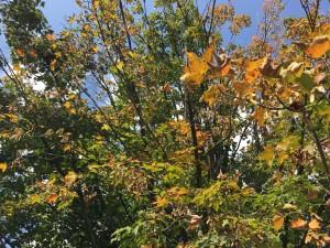 leaves 9_10 2