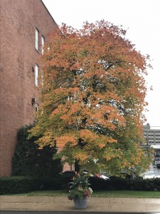 Tree in Gloversville on Thursday, October 11