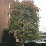 Tree in Gloversville on Monday, October 8
