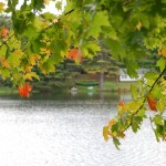 Fall foliage handing over the water