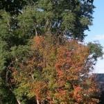 Fall Foliage Report: September 28-October 4