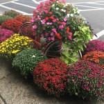 Fall Foliage Report: September 19-25