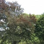 Fall Foliage Report: October 3-9